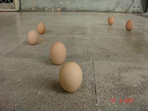 Telur Dapat Berdiri..? a dsc00051 1
