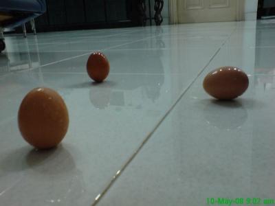 Telur Bisa Berdiri Kapan Aja..? Betul! dsc00008 1