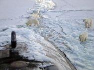 north-pole-bears