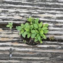wood-plant-green